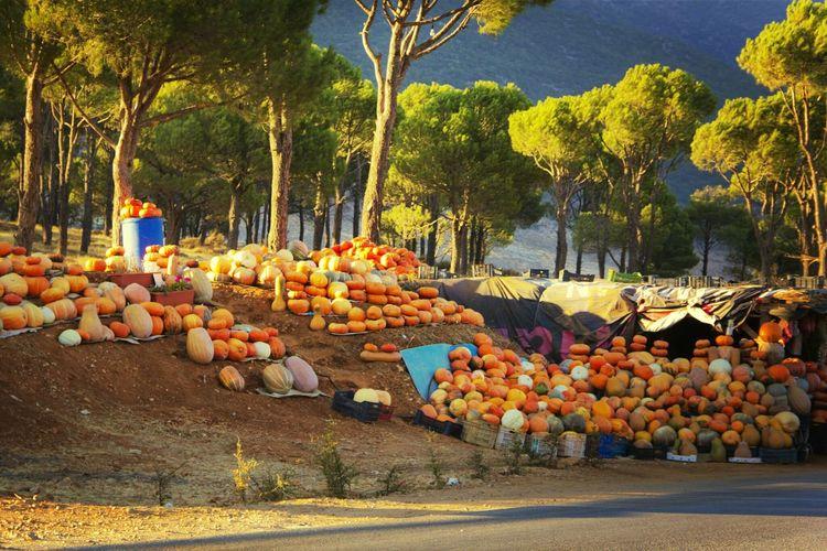 pumpkins♥