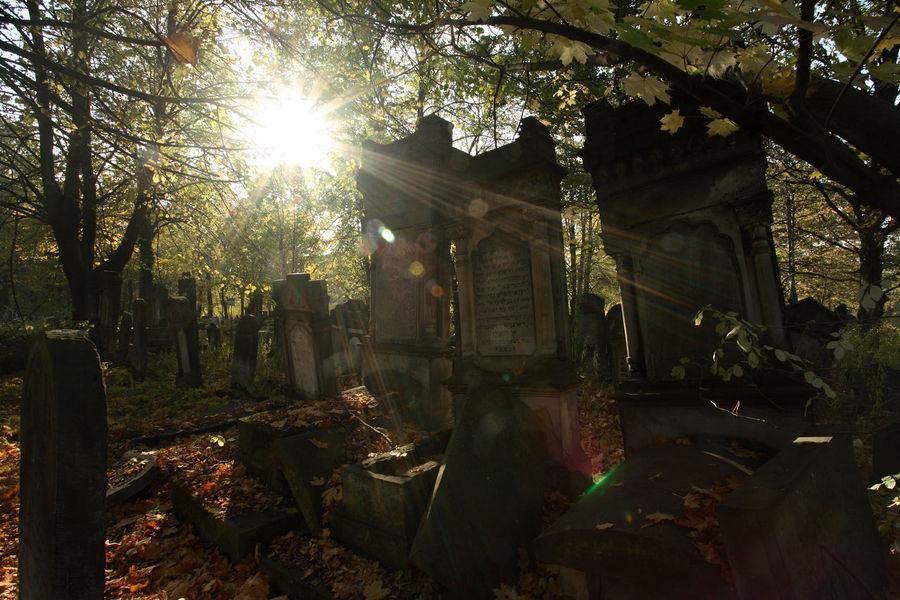 Autumn Cemetery Grave Jewish Tomb Gravestone Graveyard Jewish Cemetery Lens Flare Lodz Sunbeam Sunlight Tombstone Łódź
