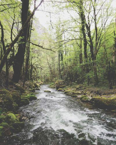 Nature 🏞 EyeEm