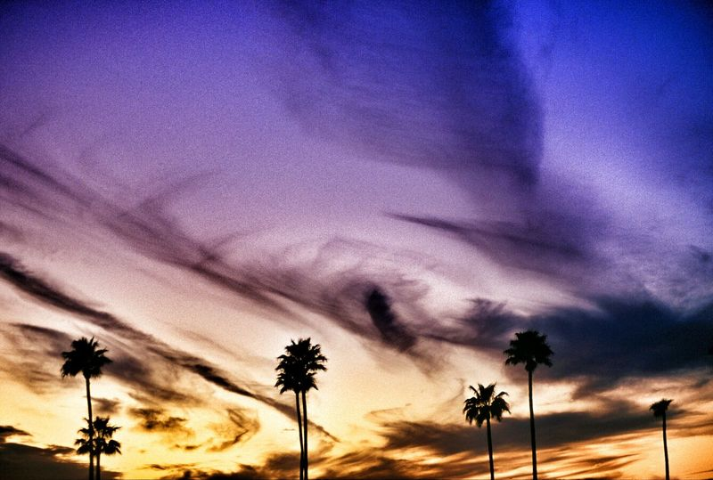 Palm trees silhouette Color EyeEm Best Shots Sunset Sunset_collection Sunset Silhouettes Palm Trees Clouds Clouds And Sky Cloud - Sky Sky Blue Purple Orange Yellow America Pheonix  Arizona Sunsets Sunset And Clouds  Palm Tree Palmtree Palmtrees Dusk Silhouette Silhouettes