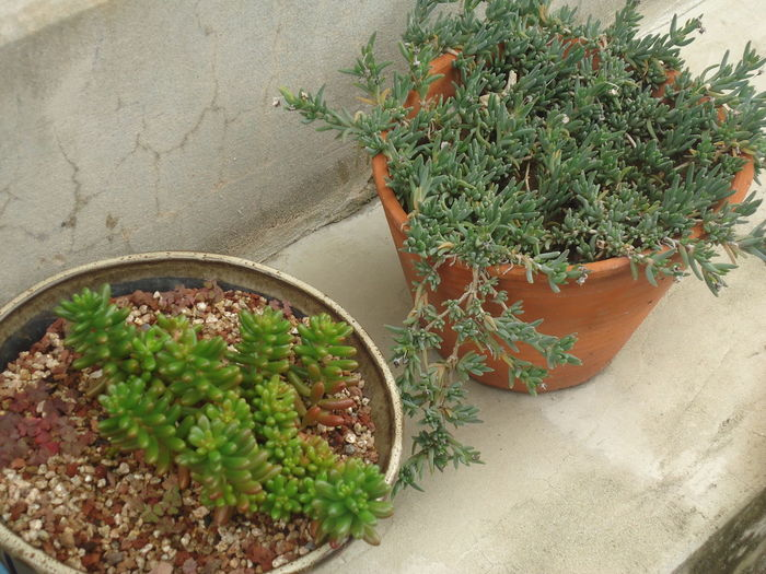 Succulents Close-up Day Freshness Green Color Growth High Angle View Indoors  Nature No People Plant Potted Plant Succulent Plant