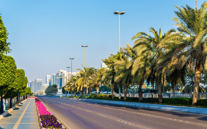 Street by palm trees against clear sky