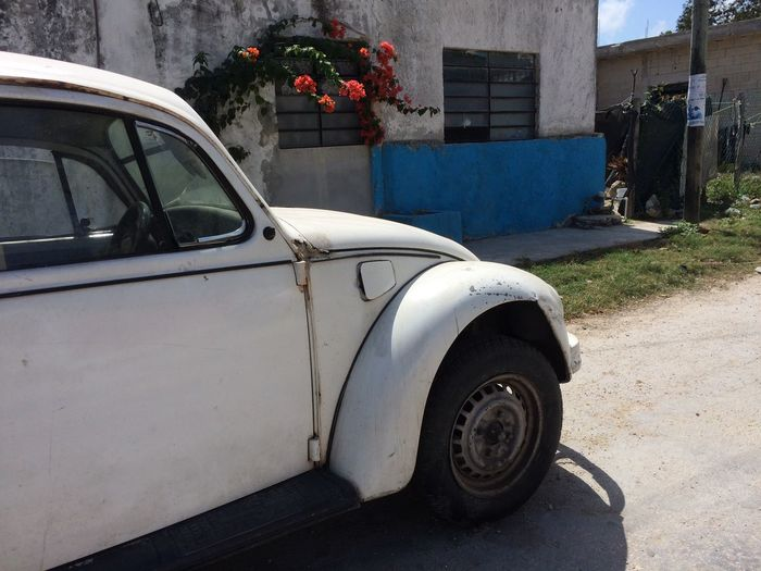 Car Land Vehicle Transportation Mode Of Transport No People Outdoors Stationary Architecture Road Day Mexico Tulum Cuba Käfer VW Käfer This Is Latin America