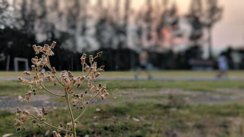 Tree Close-up Grass Sky