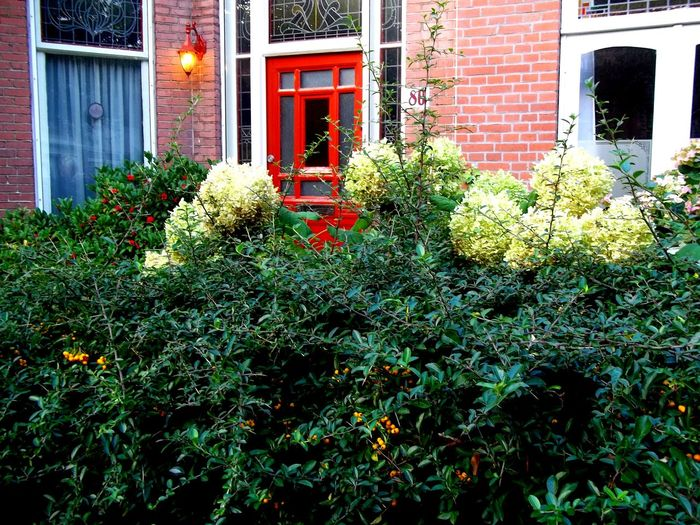Citygarden Flowers Red Colours