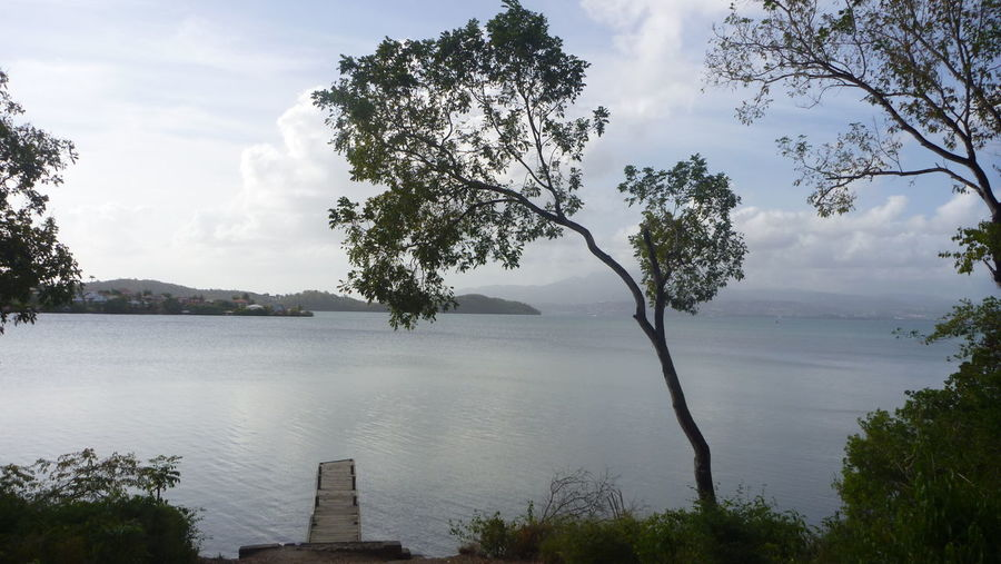 Beauty In Nature Calm Idyllic Landscape Nature No People Non-urban Scene Outdoors Pontoon Sky Tranquil Scene Tree Water Martinique Antilles Horizon Over Water Seascape Sea Seafront Breathing Space