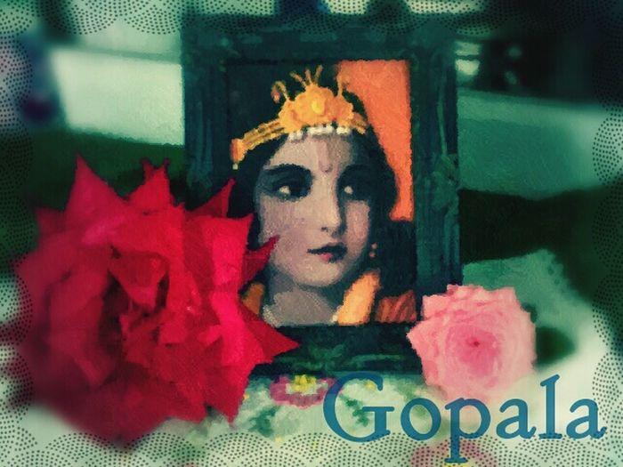 Gopala Gopala GopalaMadhava Krisna Red Rose Pink Rose Playing With Filters Beautiful Love ♥ Hawaii Namaste ❤