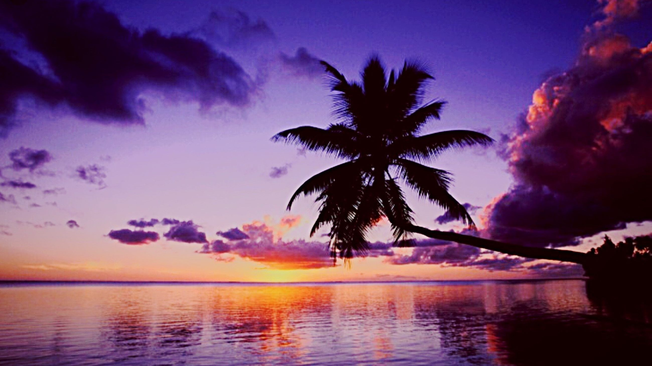 sunset, sky, water, silhouette, tranquil scene, scenics, tranquility, beauty in nature, palm tree, cloud - sky, sea, waterfront, reflection, nature, idyllic, tree, dramatic sky, cloud, horizon over water, lake