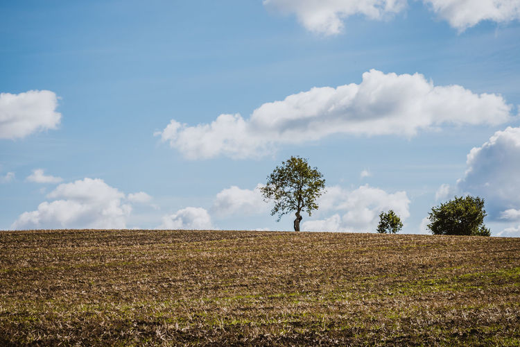 Agriculture Beauty In Nature Cloud - Sky Day Environment Field Growth Horizon Over Land Land Landscape Nature No People Non-urban Scene Outdoors Plant Rural Scene Scenics - Nature Sky Tranquil Scene Tranquility Tree