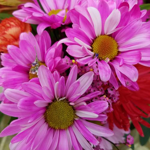 Overland Park Kansas Photography Photographer Photographerinoz Jodie Sims Kansas City Area Flower Ks Mix FlowersPhotographr Kansas City Beauty In Nature No People Close-up Nature Freshness Flower Head Petal Fragility