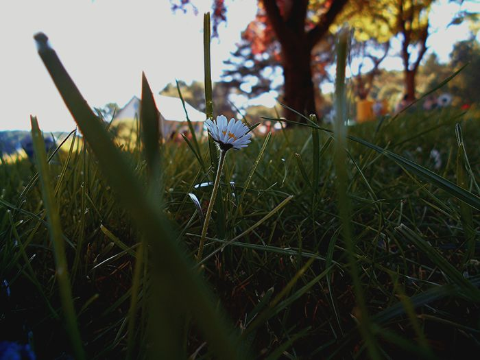 Close-up of grass growing on grassy field