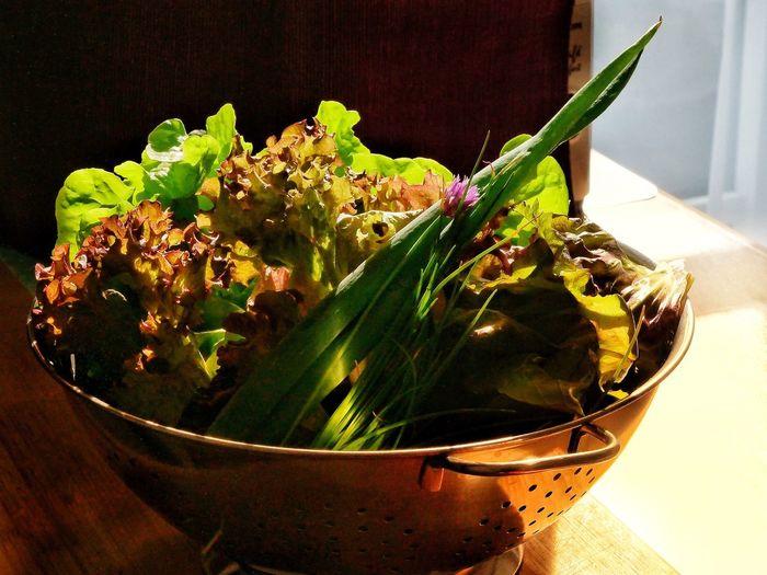 Salad Salad