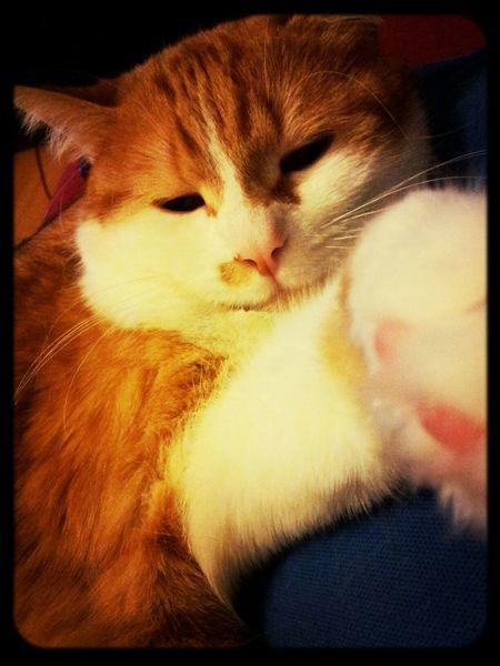 Sleepy BFF ❤ Cat♡