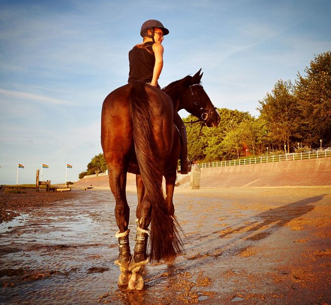 Horse Riding Horseback Riding Animal Themes Beach Day Beach Dangast Nordsee Outdoors Day Young Adult Good Times Animalphotography Summertime Sunset Germany Cute Horse Photography  Horsesofinstagram Horse Love Holiday Sitting Nature Jadebusen Sea