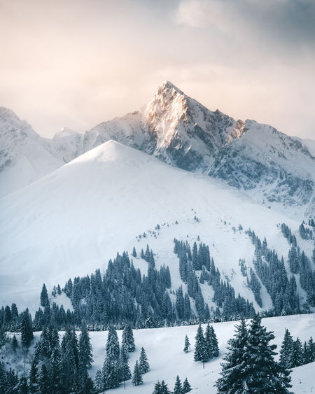 Amazing soft winter light in the Swiss Alps Morning Soft Light The Week On EyeEm Winter Alps Beauty In Nature Cold Temperature Day Landscape Mountain Mountain Range Nature No People Outdoors Range Scenics Sky Snow Snowcapped Mountain Switzerland Tranquil Scene Tranquility Tree Wilderness Area Winter