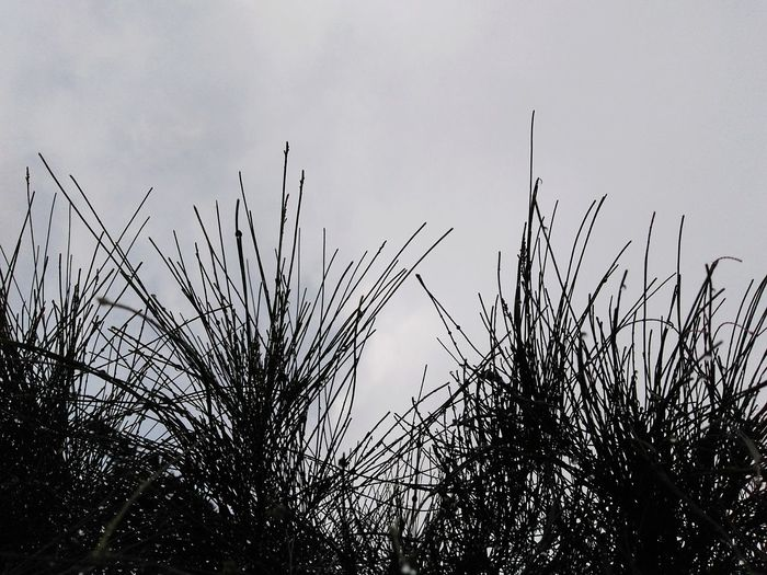threads of grass against the cloudy sky Abstract Grass Flying Rural Scene Silhouette Sky Animal Themes Countryside Tranquil Scene Reed - Grass Family Growing Non-urban Scene Calm