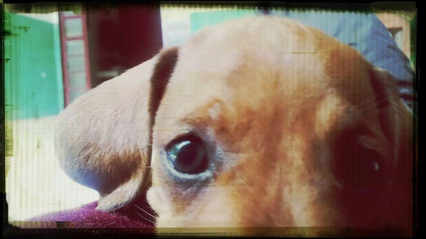 Jimi Babydog Dog Dog Love