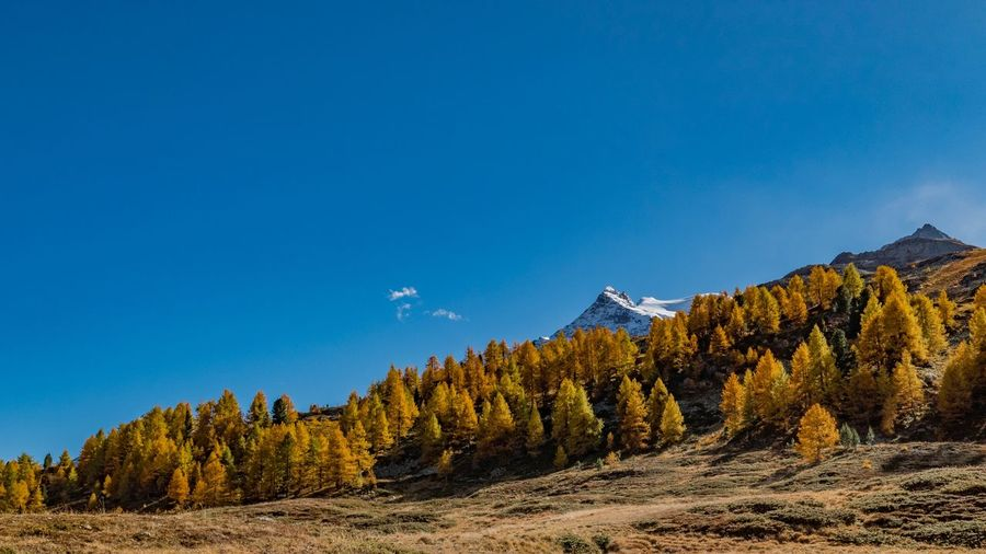 Bernina Diavolezza - Switzerland Forest Hiking Blue Sky Autumn colors Fall Tree Plant Scenics - Nature Sky Beauty In Nature Nature Land Tranquil Scene Tranquility Mountain Day