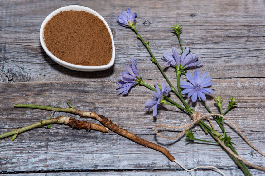 Chicory flower and powder of instant chicory on wooden background. Cichorium intybus. Chicory Coffee Chicory Flower Close-up Directly Above Drink Flower Flowering Plant Food Food And Drink Fragility Freshness High Angle View Indoors  Leaf Nature No People Plant Plant Part Purple Still Life Table Tea Wood - Material