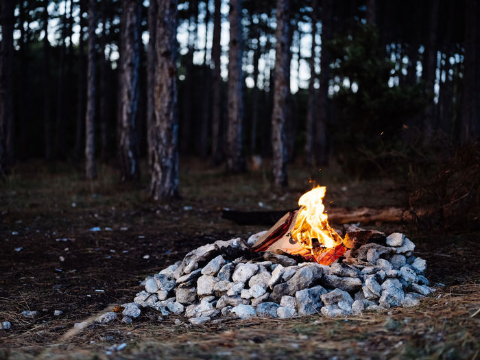 Bonfire on wood in forest