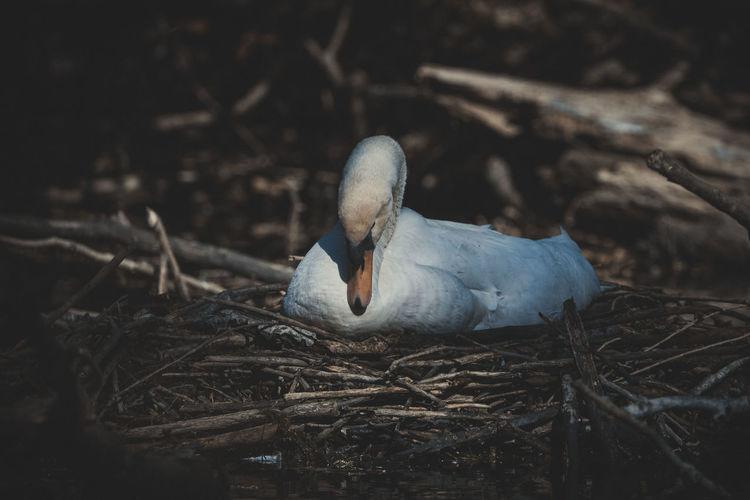 Close-up of bird perching on nest