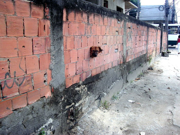 Architecture Built Structure Graffiti Brick Wall Building Exterior Outdoors Day No People City Corrugated Iron Dog Colour Your Horizn