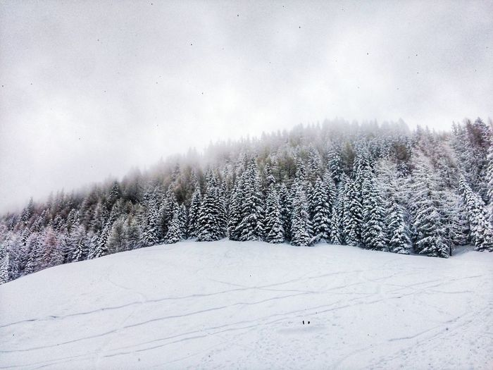 Pinzolo, Italy. Snow Winter Nature Tranquility Cold Temperature No People Tree Beauty In Nature Outdoors Scenics Landscape Sky Day Snowing Trentino Alto Adige Italy🇮🇹 Nature