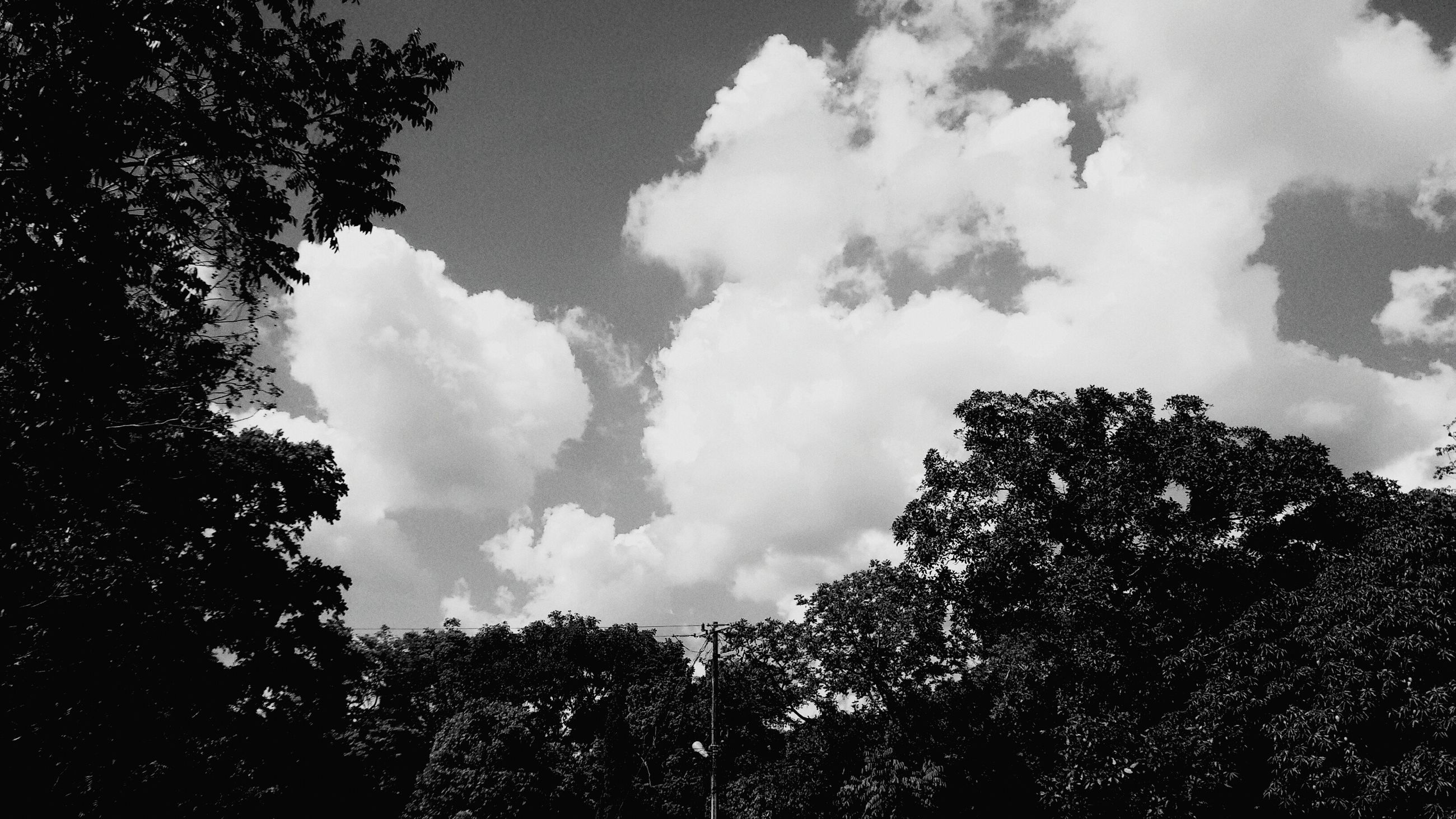 tree, low angle view, sky, silhouette, cloud - sky, nature, growth, beauty in nature, cloudy, branch, tranquility, high section, treetop, scenics, cloud, outdoors, tranquil scene, no people, day, weather