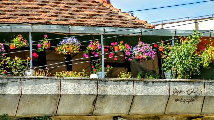 Evrything In Its Place Pastel Power Pattern Pieces Perspective Perfect Match Balcony Flowers Romania Macro Beauty Resita