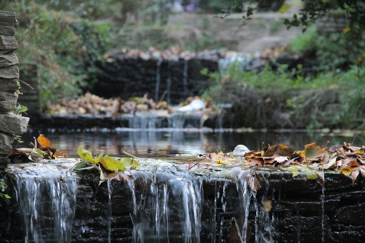 Fallen leaves on stream