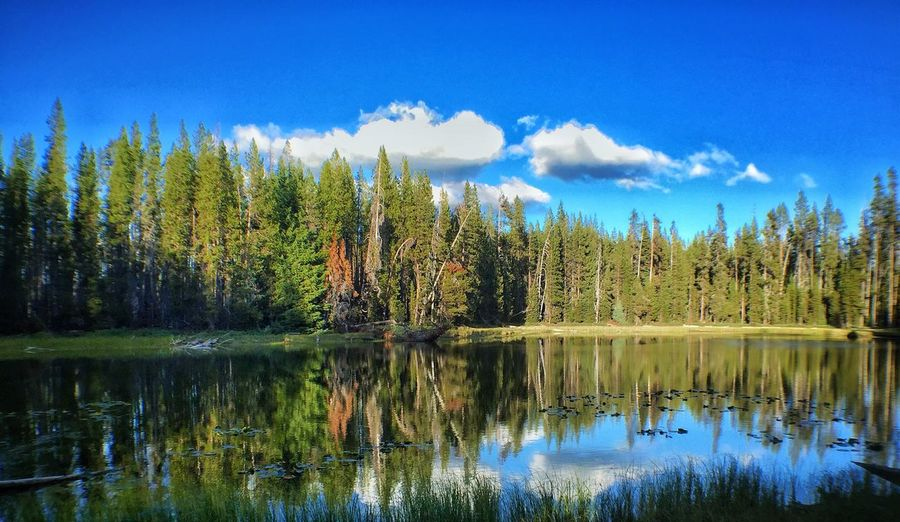 Horse Lake Tranquil Scene Water Tree Scenics Tranquility Reflection Blue Lake Beauty In Nature Sky Nature Non-urban Scene Growth Tourism Waterfront Majestic Travel Destinations Day Vacations Calm