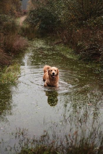 EyeEm Selects One Animal Dog Pets Mammal Animal Themes Water Domestic Animals Outdoors Animal Hair Wet Nature Swimming River Animal Day No People