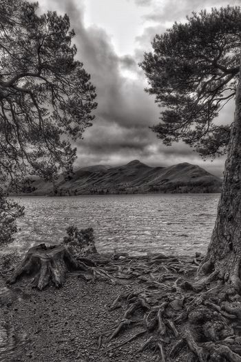 Walking round Keswick. Taking Photos Tranquility Malephotographerofthemonth Beauty In Nature EyeEm Nature Lover Tree Roots  Derwentwater The Lake District  Countryside Landscape Blackandwhite Black&white