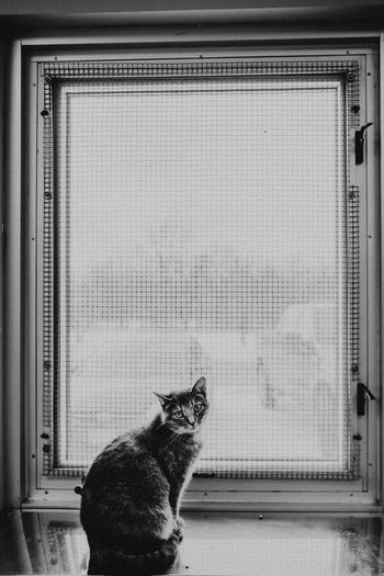Cat Pets Indoors  Looking Window Animal Themes Domestic Cat Domestic Animals Whisker Sitting Animal Shelter