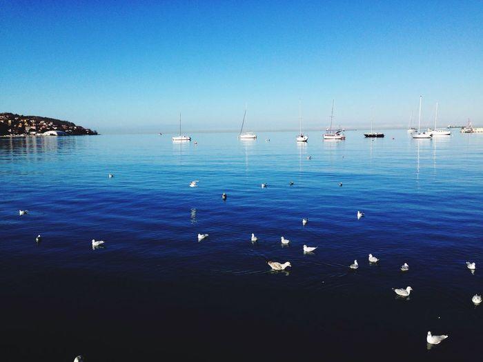 Birds At Sea Against Clear Blue Sky