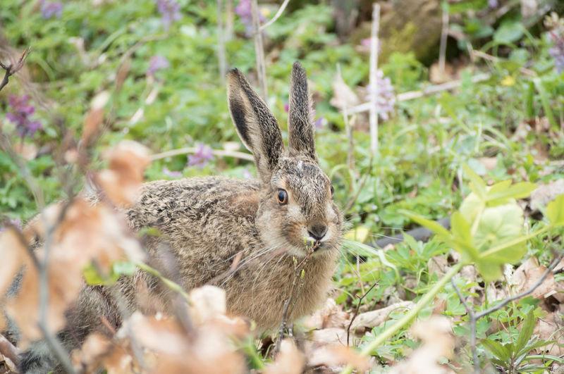 Portrait Rabbit On Field