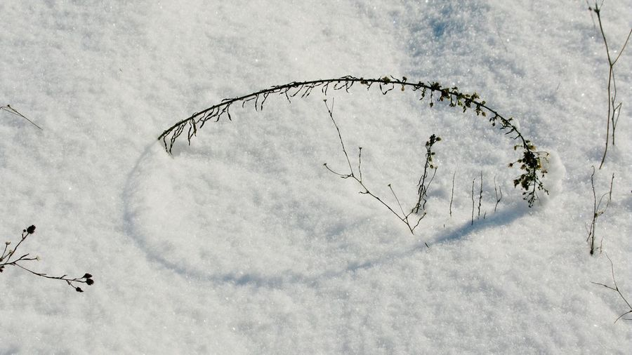 High angle view of dead plant on snow covered field
