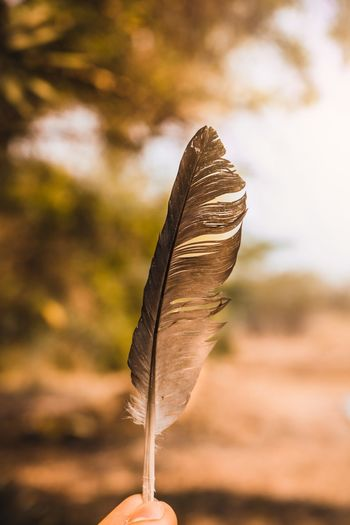 Close-up of hand holding feather