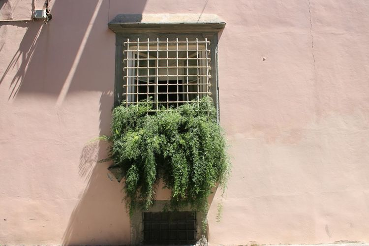 Plant Window No People Outdoors Architecture Day Nature Close-up The Week On Eyem Live For The Story Pisa Italy