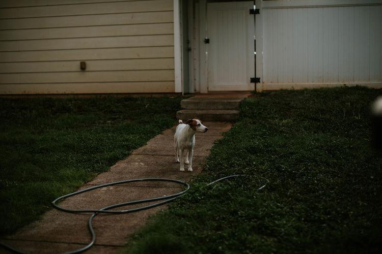 Dog outside house in yard