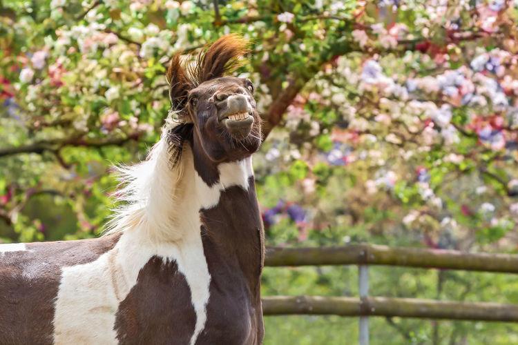 Happy horse under the tree