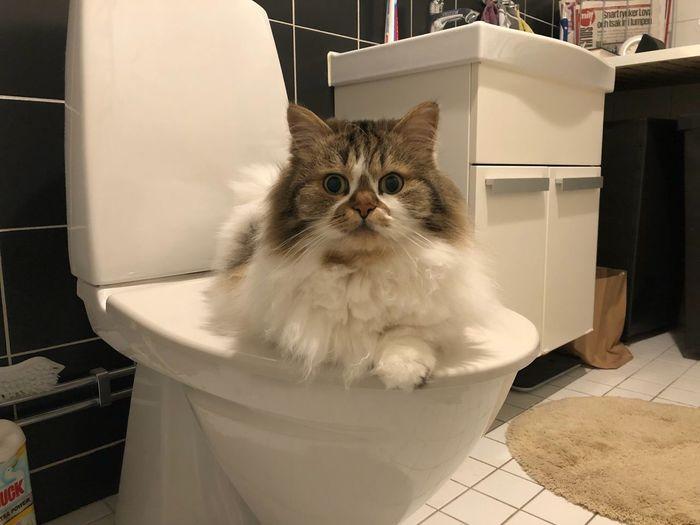 Portrait of cat in bathroom