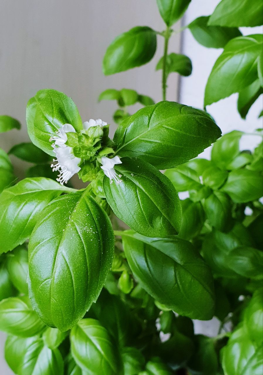 CLOSE-UP OF GREEN FLOWERING PLANT ON LEAVES