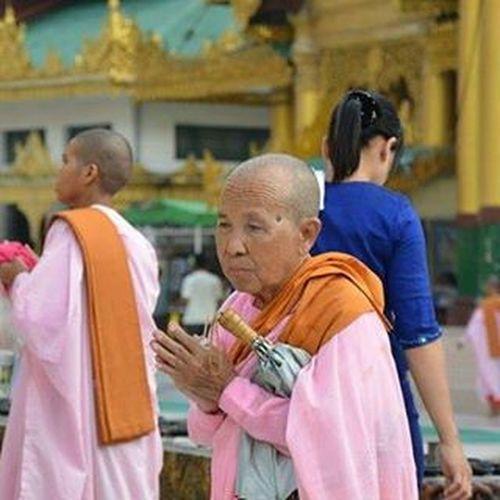 Burma Myanmar Rangoon Yangon Nuns Bhikkhuni Women Monks Buddhism Temple Pagoda Shwedagonpagoda Travel Travelshots Everydayasia Everydaylife Everydaymyanmar Peoplewatching PortraitOfAWoman Travelawesome Feel The Journey
