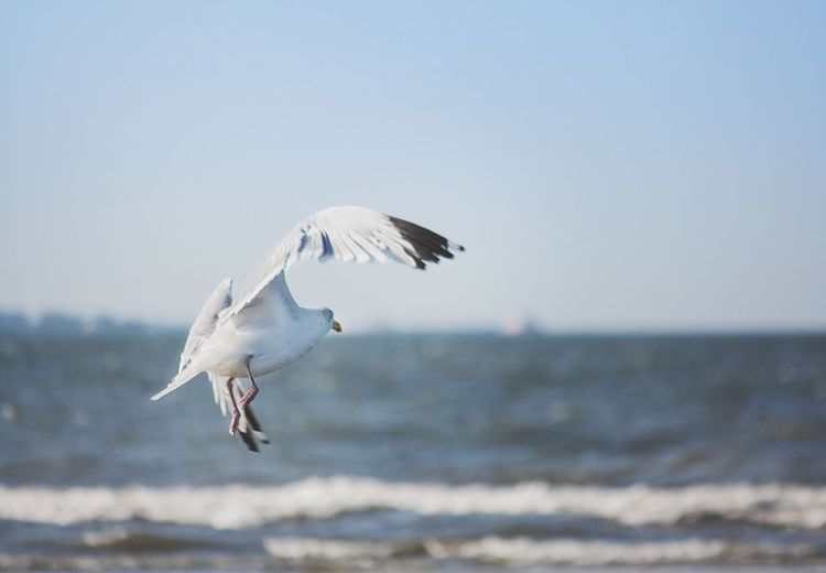 Birds flying in sky