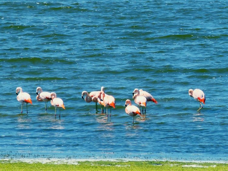 Animals In The Wild Flamingo Water Lake Animal Wildlife Nature No People Bird Animal Themes Outdoors Colony Wading Day Beauty In Nature Large Group Of Animals Mammal