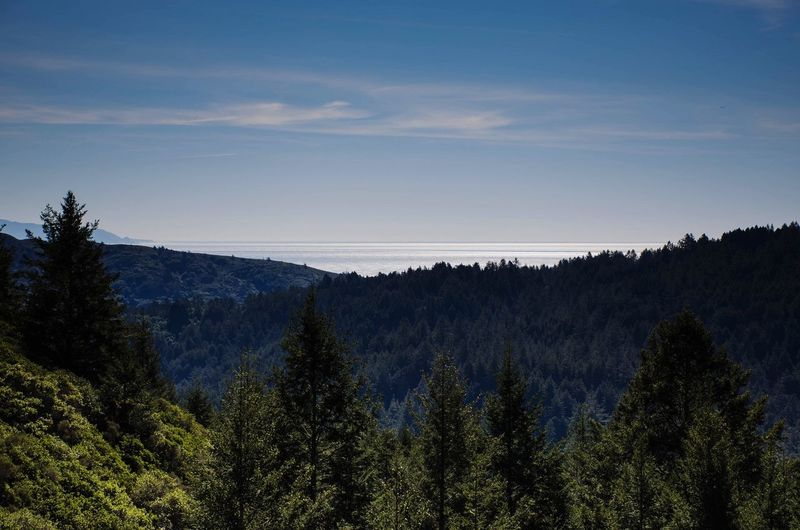 L A Y E R S. Presidents Day at Mt Tam. Hiking Trees Ocean EyeEm Best Shots Enjoying The View Light And Shadow Nature San Francisco