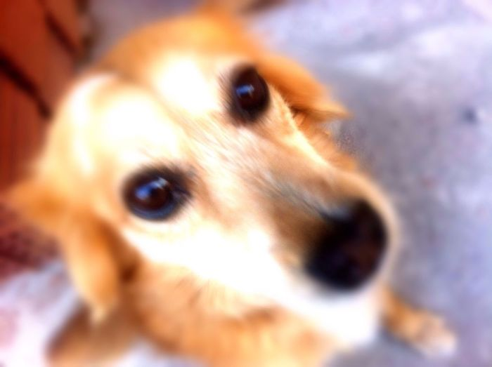 My Dog Portrait Check This Out My Name Is Milou