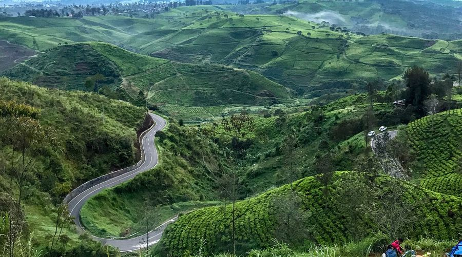 Cukul tea plantation on a cloudy morning Mountain Curve High Angle View Nature Scenics Road Beauty In Nature Green Color Landscape Winding Road Day Social Issues Outdoors Tranquility No People Mountain Range Tree Travel Destinations Mountain Road Sky EyeEmNewHere