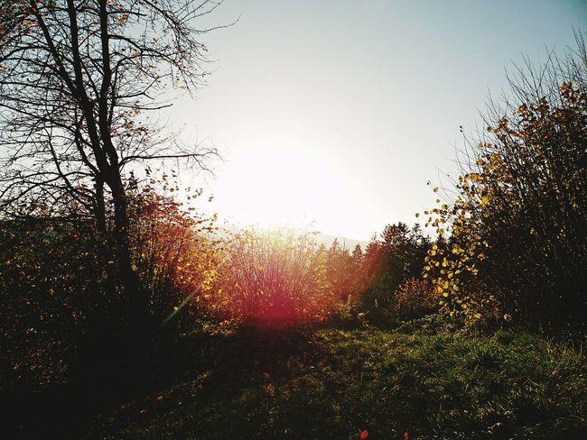 Sunlight Hillside Trees And Bushes Sunset Sun Sunbeam Shining Outline Silhouette Lens Flare Solar Flare Rays